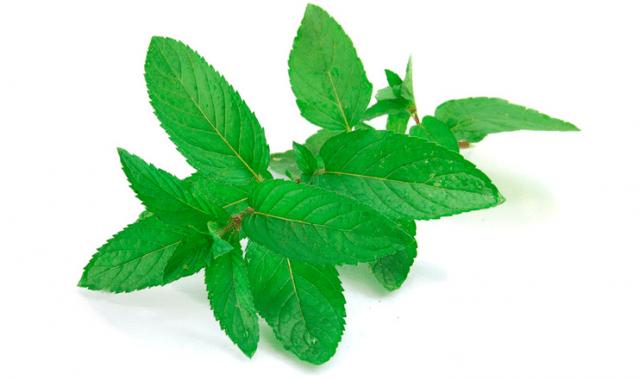nu green Honorés des Prés