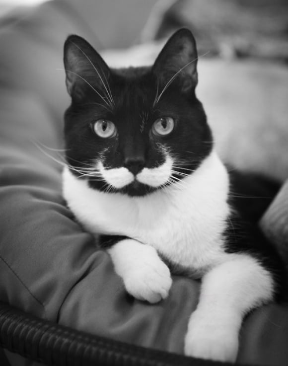 l Moustache Cat